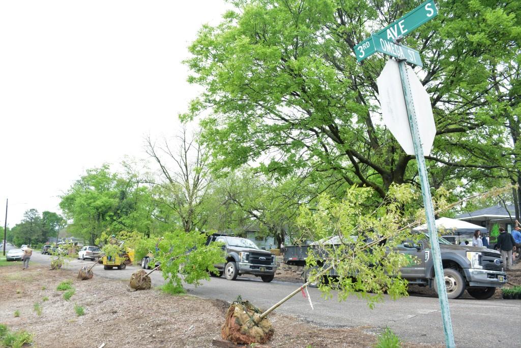A row of saplings wait to be planted along a roadside.
